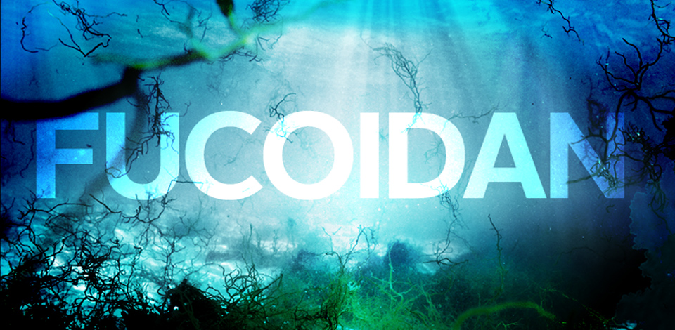 Nên dùng fucoidan loại nào là tốt? Các loại Fucoidan chữa được ung thư?
