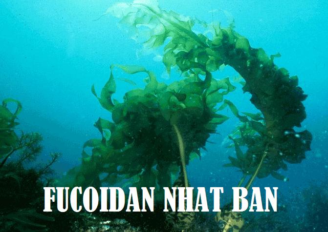 So sánh Fucoidan Nhật Bản và fucoidan Mỹ, fucoidan Việt Nam