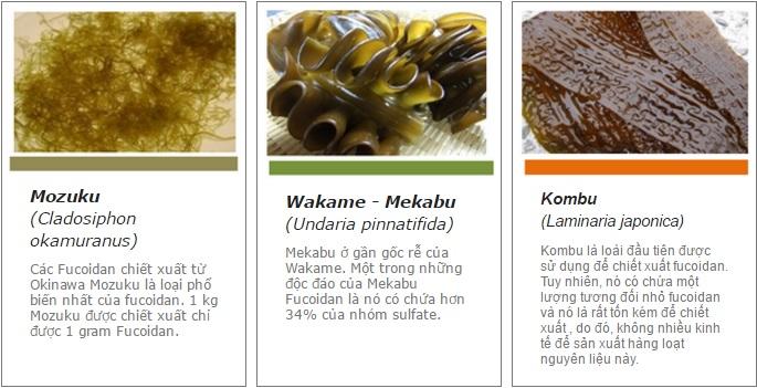 Bật mí bí mật sống thọ, liệu đó là tảo hay fucoidan nhật bản?