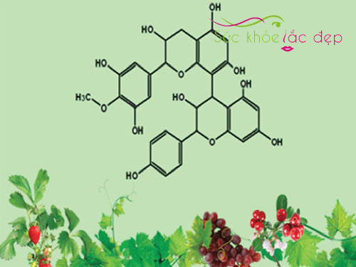 Thành phần dinh dưỡng có trong Collagen Label N – Reskin 2