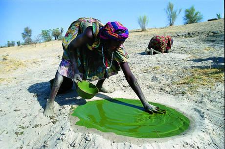 Thổ dân sử dụng tảo spirulina làm thực phẩm hàng ngày