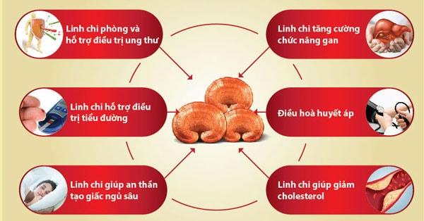 Nấm linh chi đỏ của Hàn Quốc ngăn ngừa bệnh tật