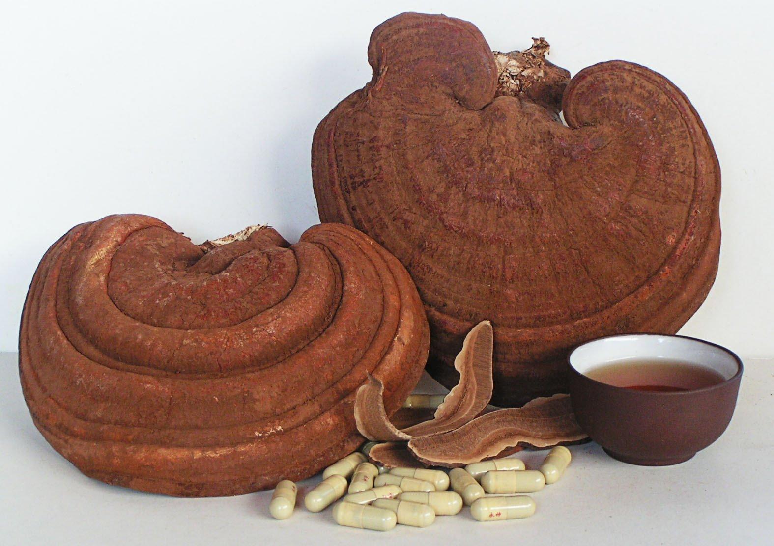 Dùng Nấm linh chi Hàn Quốc 2 tai 1kg hiệu quả