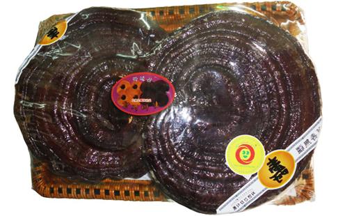 Thành phần của Nấm linh chi Hàn Quốc tai to đóng khay