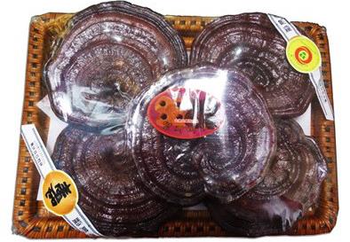 Cách dùng nấm linh chi Hàn Quốc tai to đóng khay hiệu quả
