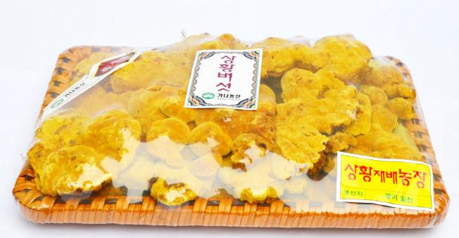 Nấm thượng hoàng vàng Hàn Quốc khay 1kg cao cấp