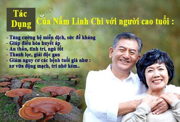 Viên Linh Chi hàn quốc nguyên chất với người cao tuổi