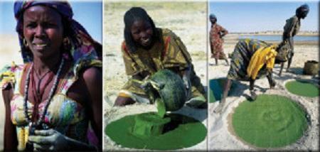 nguồn gốc của tảo Spirulina