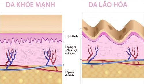 Cấu trúc collagen