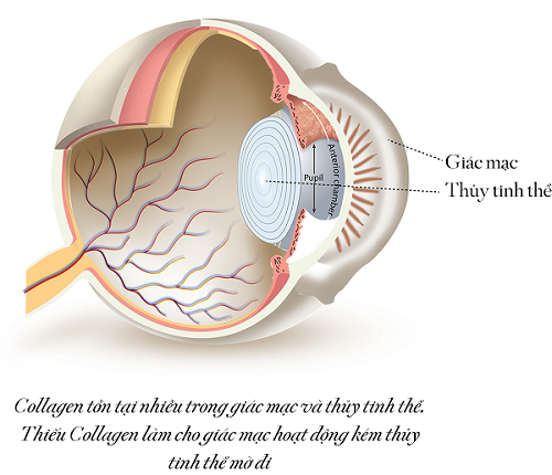 Collagen tốt cho mắt