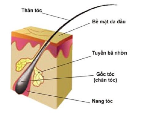 collagen tốt cho tóc
