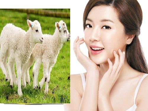 Top 8 loại viên nhau thai cừu tốt nhất hiện nay kèm theo bảng giá chi tiết