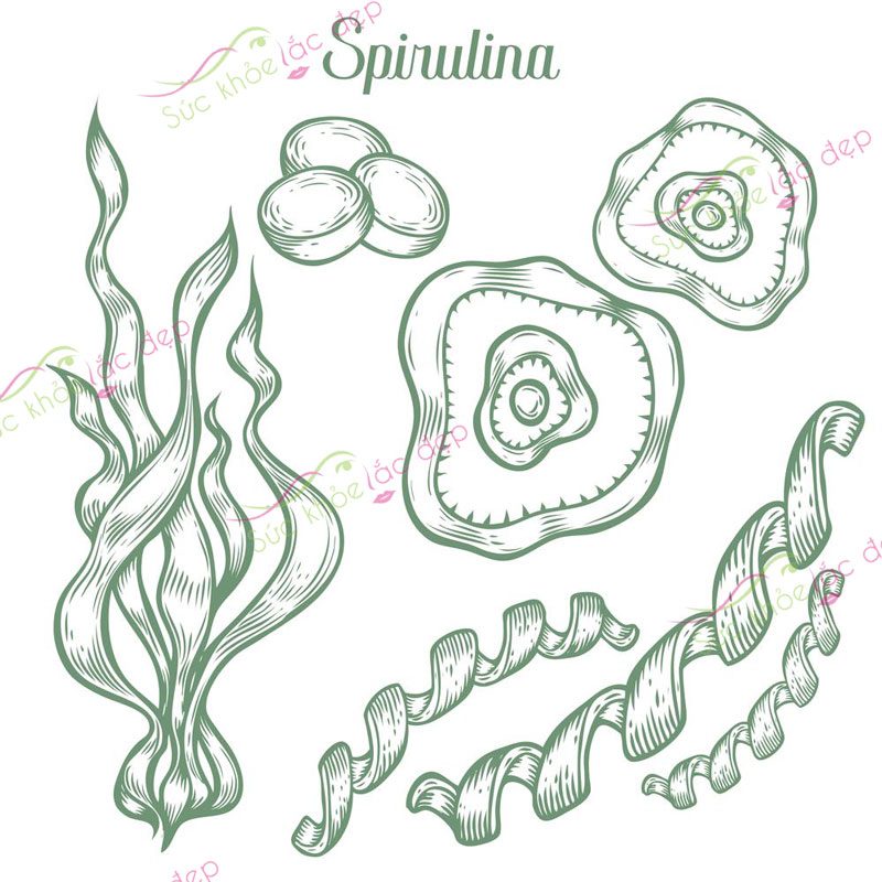 Tảo Spirulina hay còn có thể gọi là tảo xoắn vì nó là một loại vi tảo dạng sợi xoắn màu xanh lục đậm