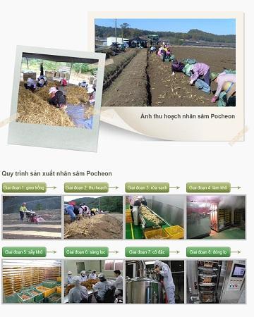 Quy trình sản xuất Hồng sâm trẻ em Pocheon 20ml x 30 gói