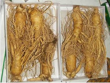 Nhân sâm tươi Hàn Quốc 8 củ trên 1kg mang lại sức khỏe vàng