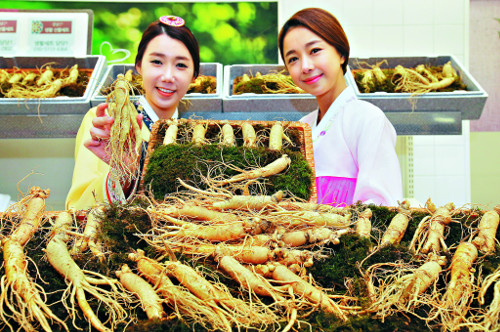 Công dụng của sâm tươi Hàn Quốc 12 củ