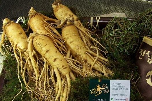 Công dụng của sâm tươi Hàn Quốc 5 củ trên 1kg