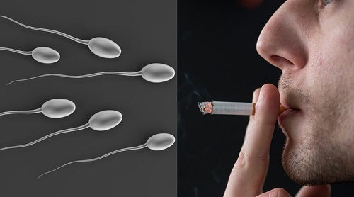 Thuốc lá gây suy yếu khả năng sinh sản