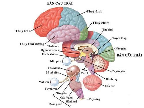 bổ não dha của nhật bản