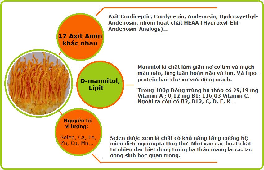 Thành phần dưỡng chất và tác dụng  của chúng trong viên uống đông trùng hạ thảo Tohchukasuo