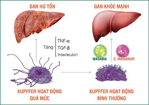 Nguyên nhân dẫn tới các bệnh về gan