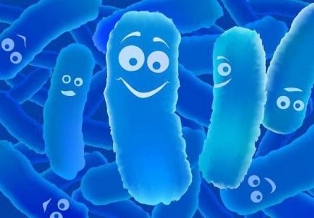 Tảo mặt trời Spirulina giúp lợi khuẩn sinh trưởng và phát triển
